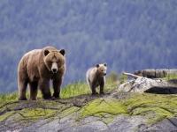 Bär und Jungen, Foto: Klaus Gretzmacher/ Fasten Your Seatbelts