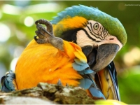 Costa Rica Gelbbrust Ara, Foto: travel-to-nature