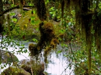 Regenwald, Foto: travel-to-nature