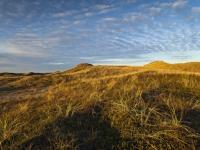 Stranddünen bei Lodbjerg, Foto: VisitDenmark