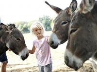 Dänisches Landleben - Mädchen mit Eseln, Foto: VisitDenmark