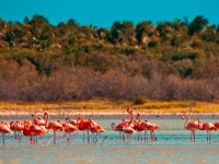 Flamingos in der Dominikanischen Republik, Foto: Dominican Republic Ministry of Tourism