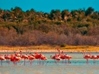 Flamingos in der Dominikanischen Republik, Foto: Dominican Republic Ministry of Tourism