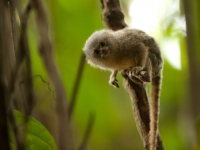 Artenvielfalt im Dschungel Ecuadors, Foto: Ministerio de Turismo del Ecuador