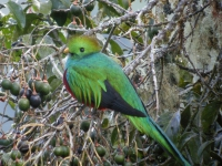 Quetzal, Frank.Vassen, CC BY, flickr