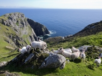 Slieve League Cliffs Irland, Foto: Brian Morrison (Tourism Ireland)