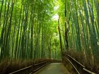 Bambushain bei Arashiyama, Kyoto