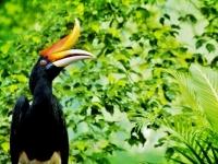 malaysia-natur