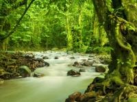 tropischer-regenwald-malaysia