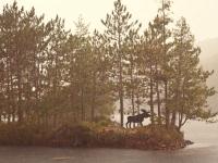 Elch am Ufer von North Bay, Foto: Ontario Tourism Marketing Partnership Corporation