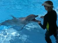 Delfinshow im Secret Garden, The Mirage, Las Vegas [Foto: Mirschel / NIEDblog]