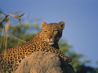 Unter Beobachtung des Leoparden, Foto: Best of Travel Group