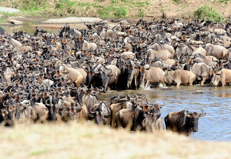 serengeti darf nicht sterben stream