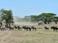 Serengeti Pirschfahrt, Foto: Outback Africa