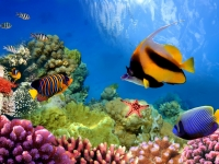 Marine life on the coral reef, vlad61_61