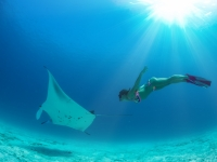 Model freediver with fins in tropical water watching manta ray underwater on blue background, willyam