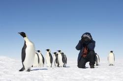 Antarktis: Reisen in die Heimat der Pinguine