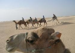 Tunesien: Traumstrände und Kulturschätze