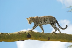 Tansania: Safari-Abenteuer und Sansibar
