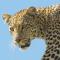 Tansania: Safari-Abenteuer und Sansibar - Vorschau