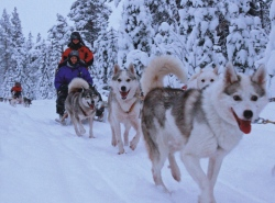 Finnland: Rentiere, Huskys und Polarlichter