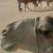 Tunesien: Traumstrände und Kulturschätze - Vorschau