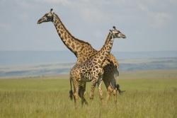 Hakuna Matata in Kenia