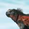 Ecuador und die Galapagos-Inseln - Vorschau