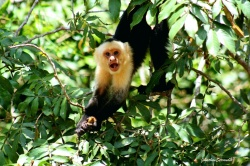 Pura Vida in Costa Rica - 100 Urlaubsziele