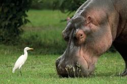 Afrikas Garten Eden: Simbabwe