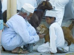 Sultanat Oman - Orient pur!