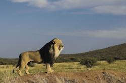 Namibia: Ein einziges Naturschauspiel