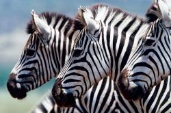 Magisches Südafrika - 100 Urlaubsziele