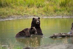 Last Frontier: Naturerlebnis Alaska - 100 Urlaubsziele