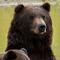 Last Frontier: Naturerlebnis Alaska - Vorschau