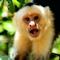 Pura Vida in Costa Rica - Vorschau