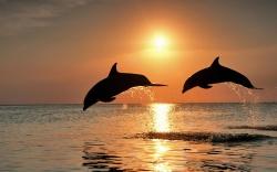 Vielfältige Inselträume der Karibik - 100 Urlaubsziele