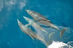Einzigartige Delfin- und Wal-Reisen auf La Gomera - 100 Urlaubsziele