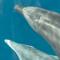 Einzigartige Delfin- und Wal-Reisen auf La Gomera - Vorschau