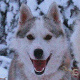 Finnland: Rentiere, Huskys und Polarlichter - Vorschau