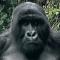 Uganda & Ruanda: Heimat der Gorillas - Vorschau