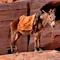 Zauberhaftes Königreich Jordanien - Vorschau