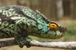 Einzigartige Flora und Fauna in Madagaskar