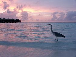 Himmel auf Erden: Malediven-Urlaub