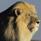 Namibia: Ein einziges Naturschauspiel - Vorschau