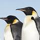 Antarktis: Reisen in die Heimat der Pinguine - Vorschau
