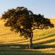 Portugal: Tolles Klima und jede Menge Abwechslung - Vorschau