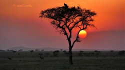 Tansania: Safari-Abenteuer und Sansibar - 100 Urlaubsziele