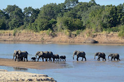 (Bild: Luangwa River crossing, Geoff Gallice, CC BY)