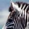Magisches Südafrika - Vorschau